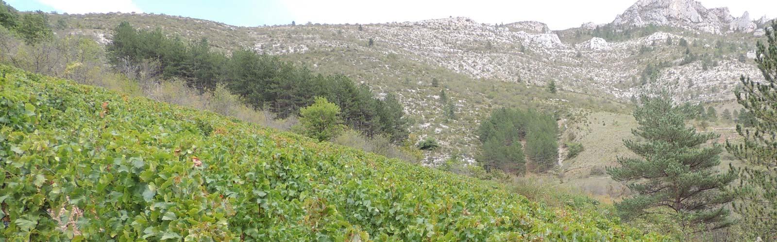 Rando dans les Gorges du Tarn